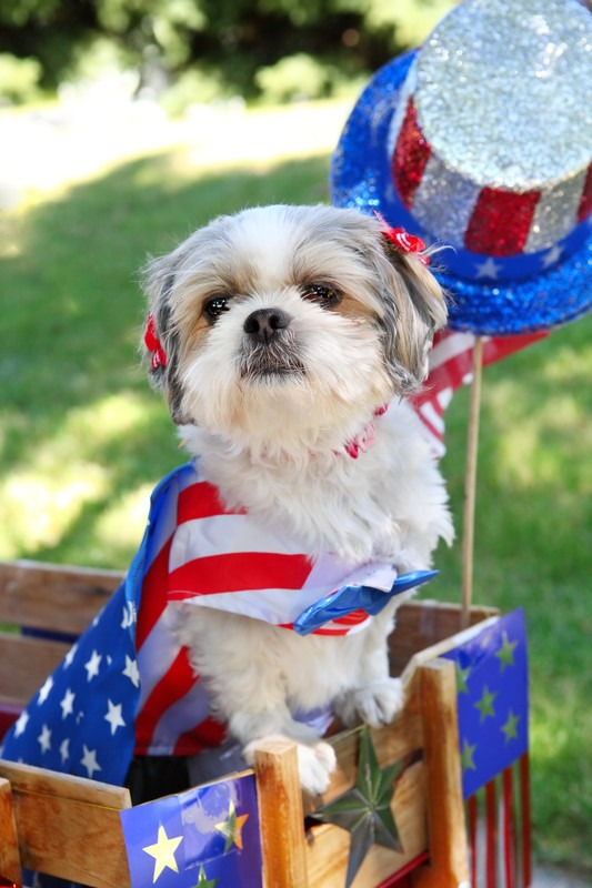 USA-Made Beefhide Chews for Patriotic Pups