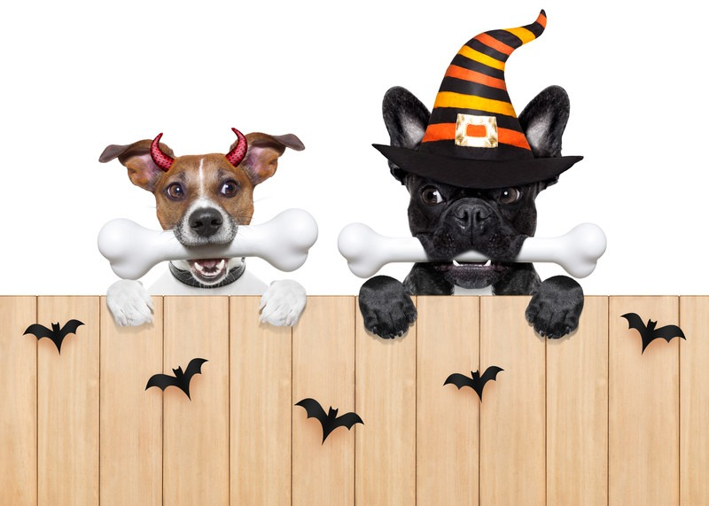 Tips for a dog-friendly Halloween party