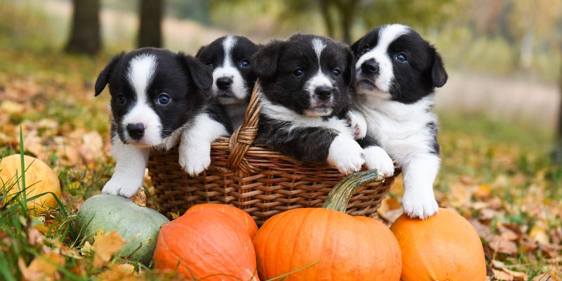 Happy Howlidays Tips For A Dog Friendly Halloween Party Pet Factory