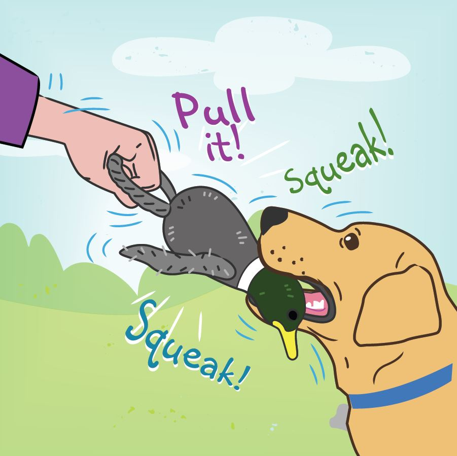 Demonstration on how to use the pull and squeak toy
