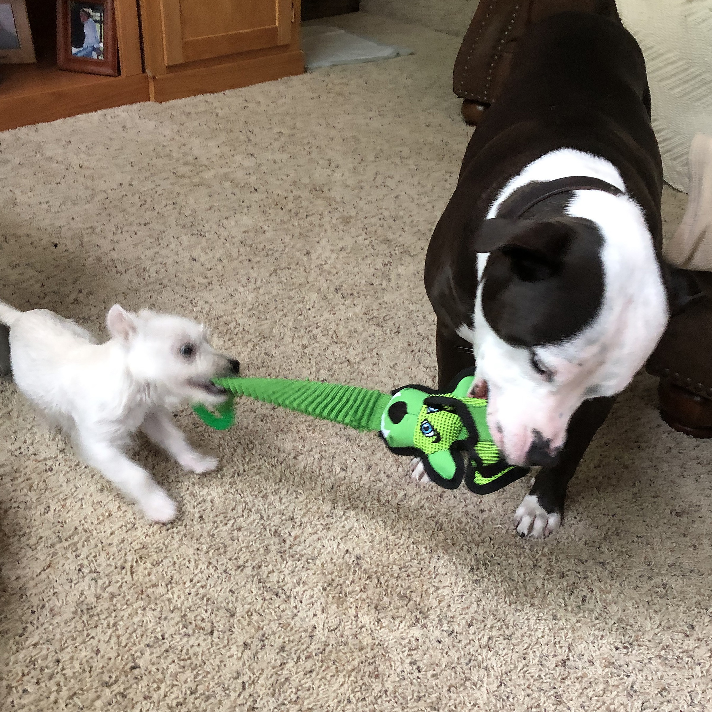 Tough and tug _ Neon Green _ tough dog toy_ ballistic nylon_ petfactory